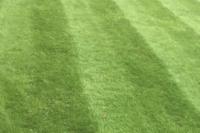A nice clean lawn