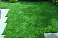 How about this lawn in Runcorn - after Lawnsavers lawn care treatment