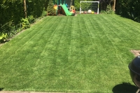 Lawn in Frodsham after Spring Treatment