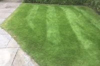 Lawn looking much better after Lawnsavers treatment