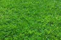 Lawn following treatment