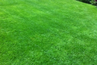 Lawn after treatment