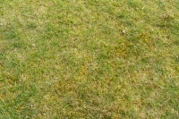This was a lawn before treatment