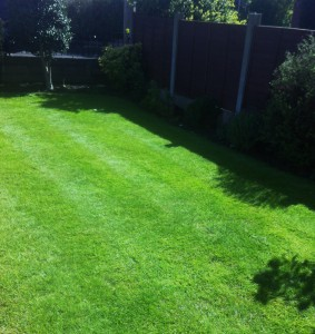 lawn after treatment (3)
