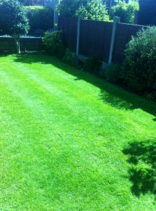 lawn after treatment (4)